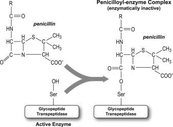 Penicillin - an overview | ScienceDirect Topics