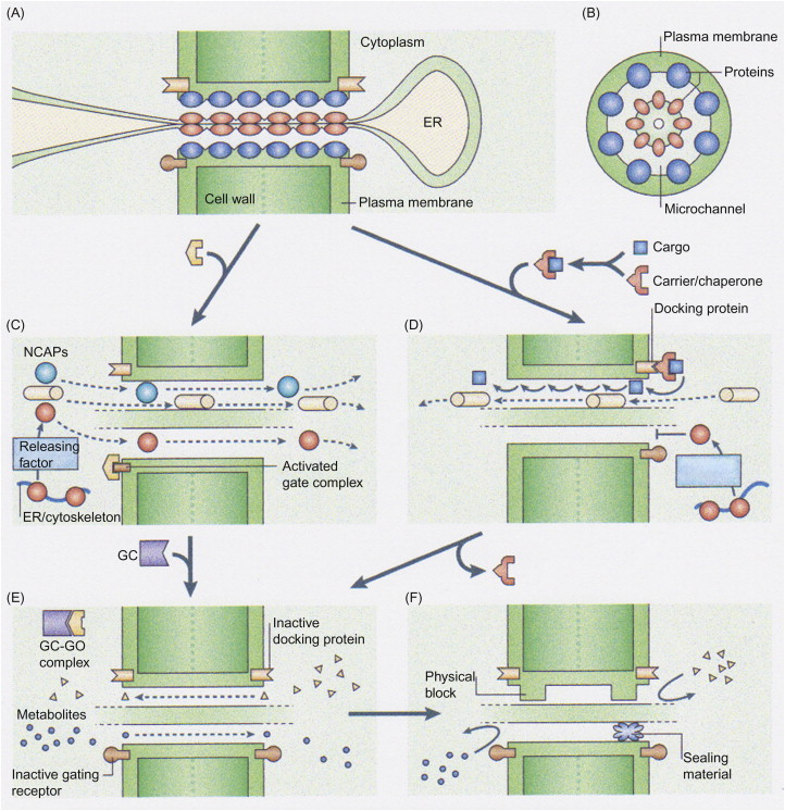 Polydioxanone - an overview | ScienceDirect Topics