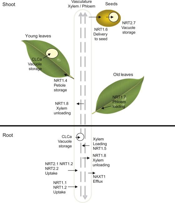Functions Of Macronutrients Sciencedirect
