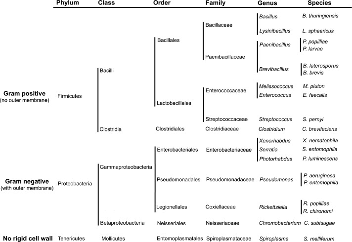 Entomopathogenic Bacteria - an overview | ScienceDirect Topics