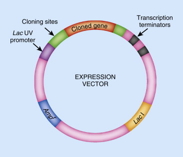 Expression Vector - an overview | ScienceDirect Topics