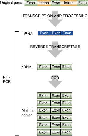 Reverse Transcriptase An Overview Sciencedirect Topics