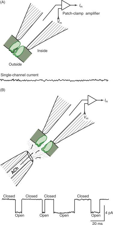 patch clamp technique pdf