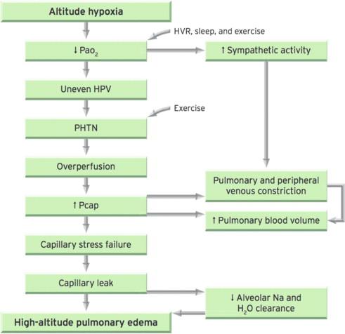 High Altitude Pulmonary Edema An Overview Sciencedirect Topics