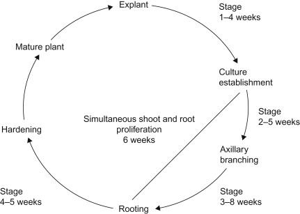 Somaclonal Variation - an overview | ScienceDirect Topics
