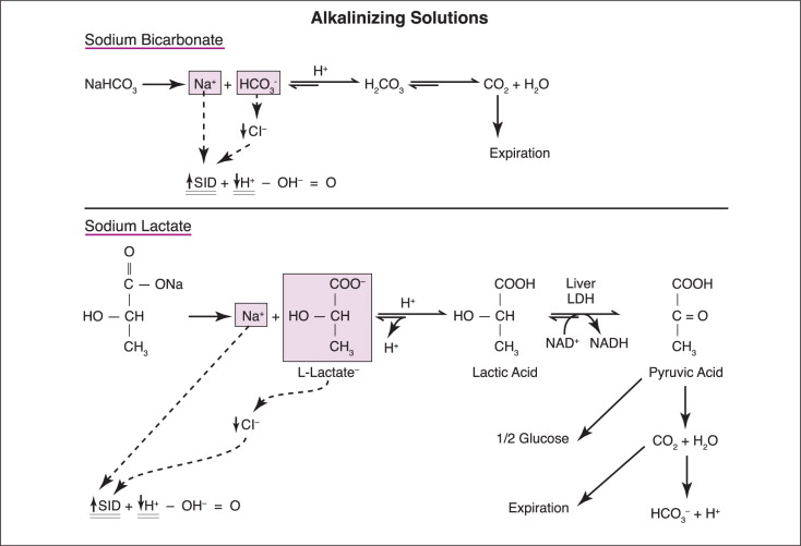 Sodium Bicarbonate - an overview | ScienceDirect Topics