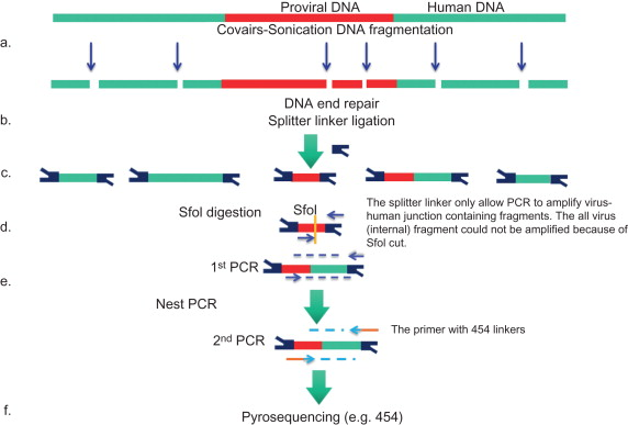 Restriction Enzyme - an overview | ScienceDirect Topics
