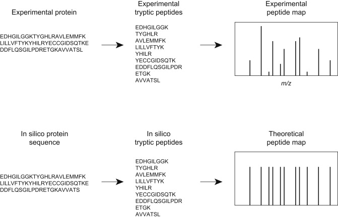 Peptide Mapping - an overview | ScienceDirect Topics on