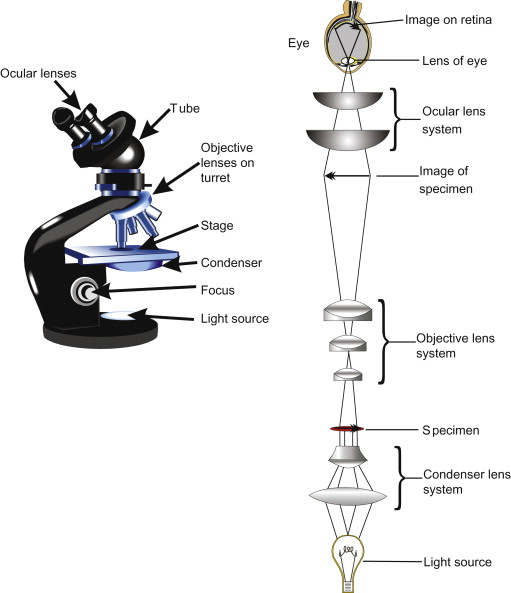 Optical Microscope - an overview | ScienceDirect Topics