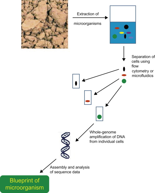 Bioinformation And Omic Approaches For Characterization Of