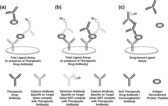 Immunoassay Method - an overview | ScienceDirect Topics