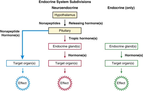 Hormone Concept Map.Endocrine Regulation An Overview Sciencedirect Topics