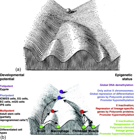 Tissue Engineering and Stem Cell Therapy for Orthodontists ... on