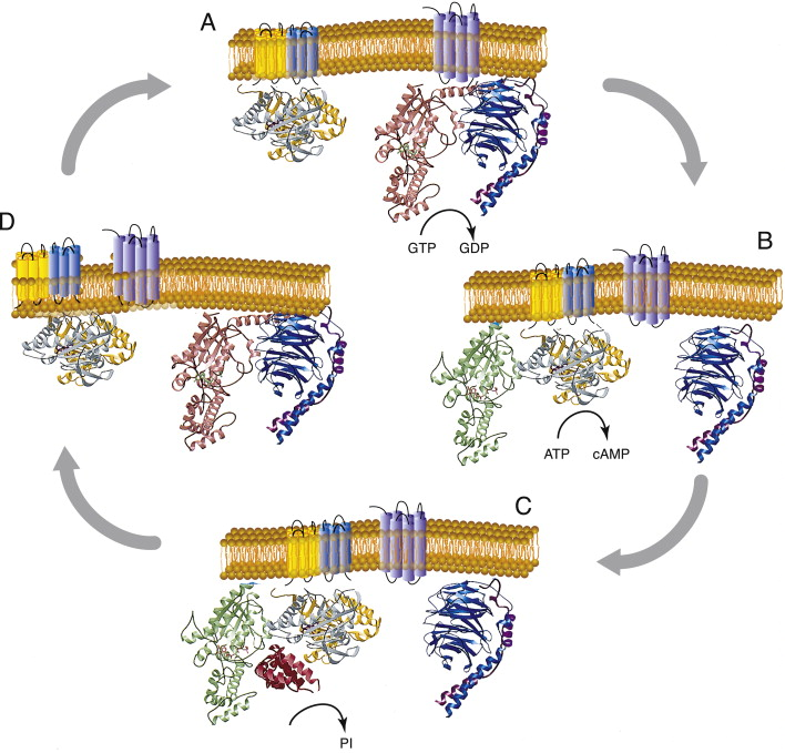 G Protein - an overview | ScienceDirect Topics