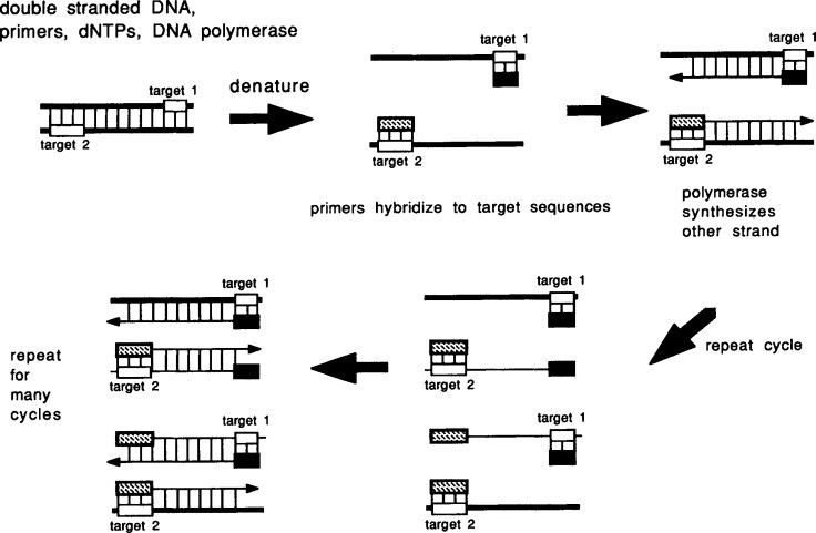 Polymerase Chain Reaction - an overview | ScienceDirect Topics