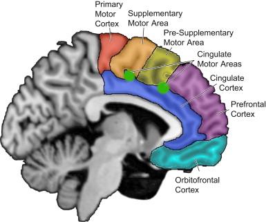 Disorders of Frontal Lobe Function - ScienceDirect