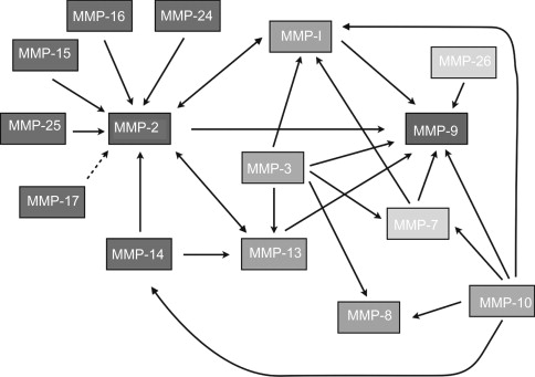 Protection And Reversal Of Hepatic Fibrosis By Polyphenols