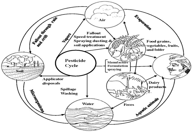 Wheat Contaminants (Pesticides) and their Dissipation during