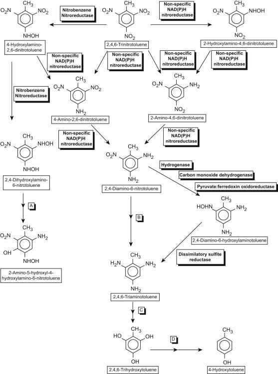 Trinitrotoluene - an overview | ScienceDirect Topics