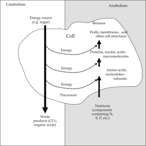 relationship between gibbs free energy and activation energy