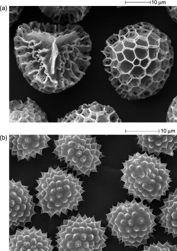 Pollen and Spore Shells—Nature's Microcapsules - ScienceDirect