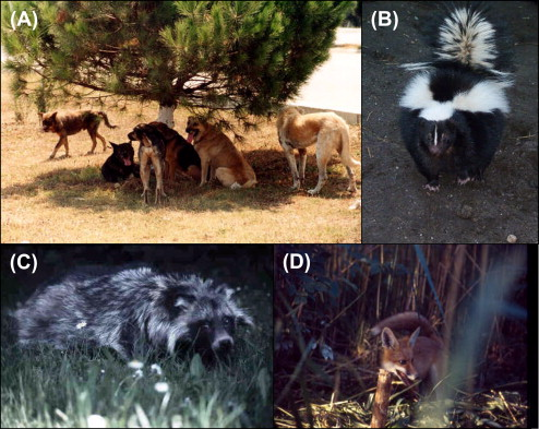 Rabies - an overview | ScienceDirect Topics