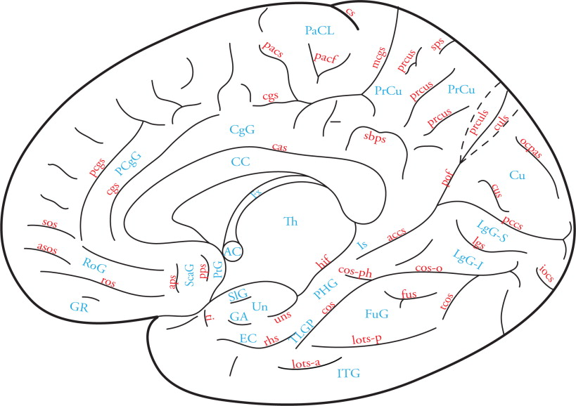 which structure is a thick tract of white matter that interconnects the two cerebral hemispheres?