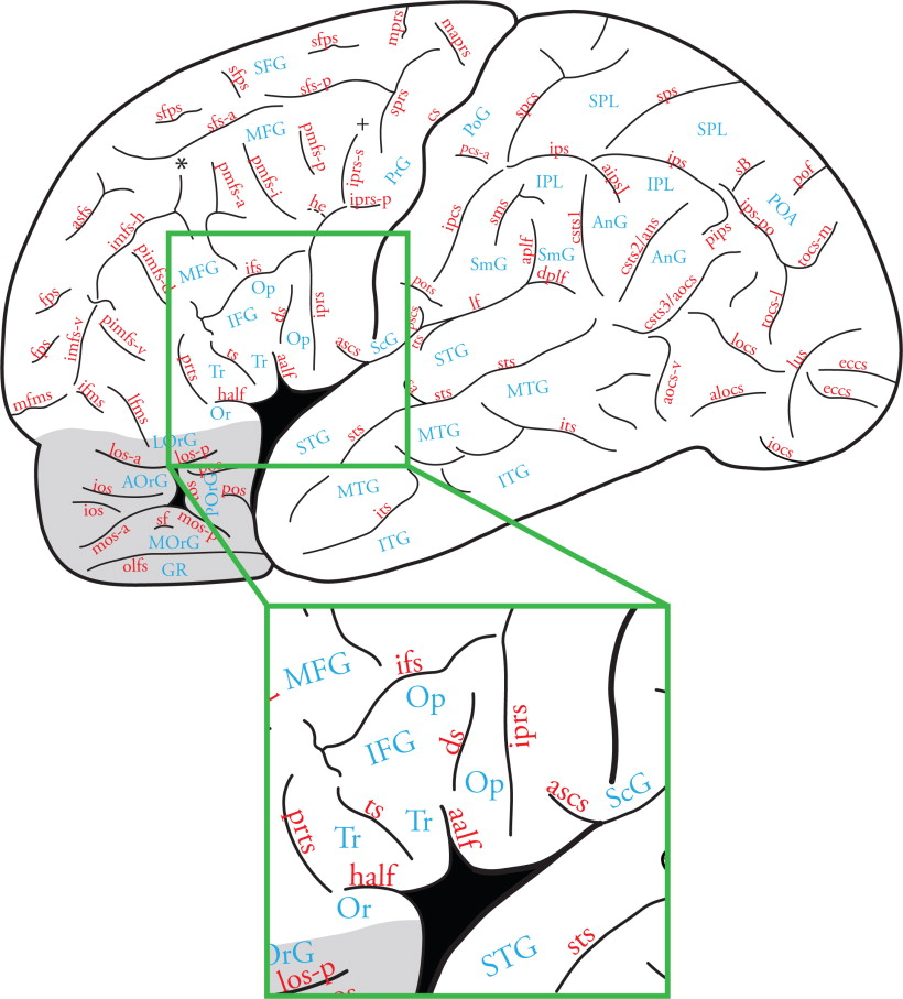 Inferior Frontal Gyrus An Overview Sciencedirect Topics