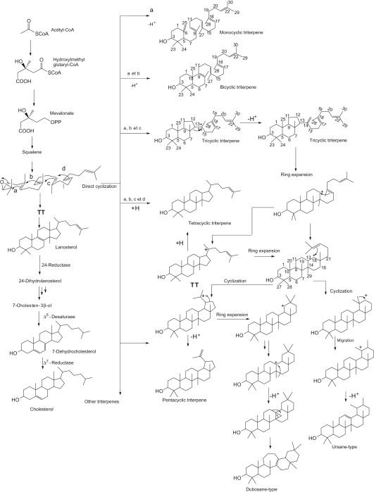 Isopentenyl Diphosphate