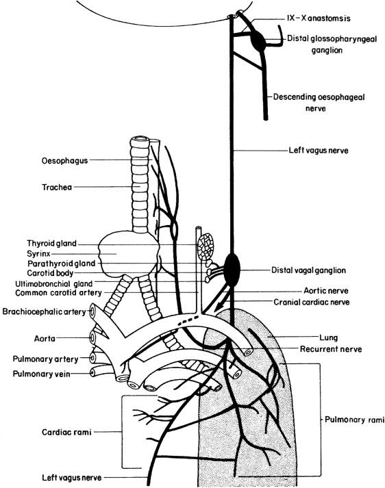 The Cardiovascular System - ScienceDirect