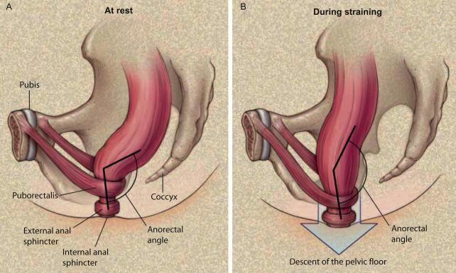 Miki japanese shemale anal tube