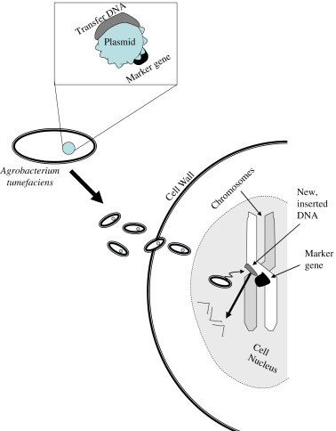 Messenger Rna Synthesis