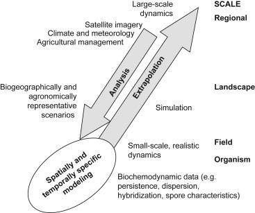 Gene Flow - an overview | ScienceDirect Topics