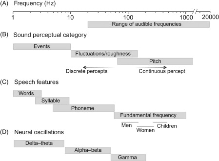 Tonotopy - an overview | ScienceDirect Topics
