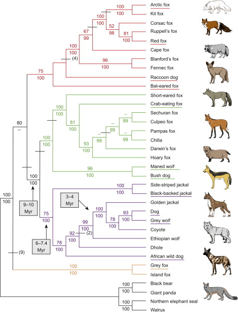 The Social Dog: History and Evolution - ScienceDirect