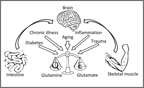 Glutamine as a Potential Neuroprotectant in Alzheimer's Disease - ScienceDirect