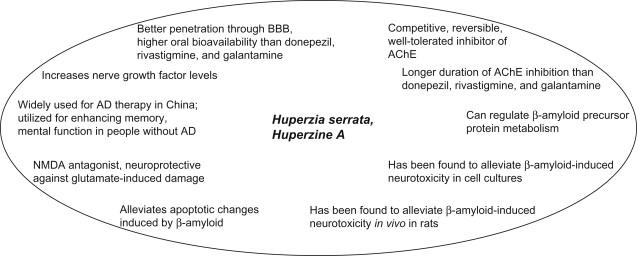 huperzine a nmda receptor antagonist