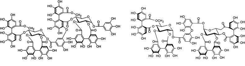 Paeonia lactiflora - an overview   ScienceDirect Topics