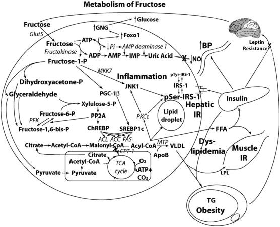 Fructokinase