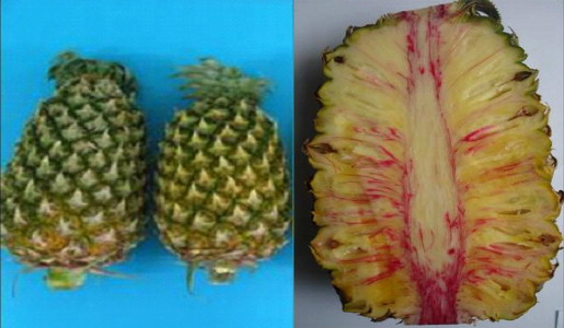 Postharvest Physiology and Quality Maintenance of Tropical