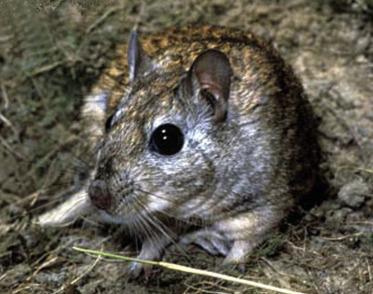 Humane Capture Vermin Pest Control 300 x 150 x 130mm Rat Trap Cage Mesh Box
