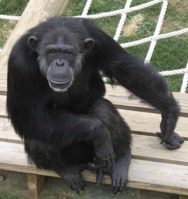 Boys Banana Gang Unusual Suspects Monkey Ape T-Shirt Cotton 3 to 9 Years