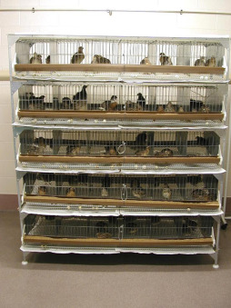 Battery Cages - an overview | ScienceDirect Topics