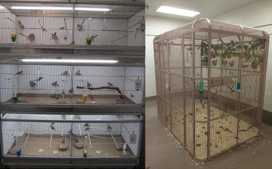 Zebra Finches in Biomedical Research - ScienceDirect