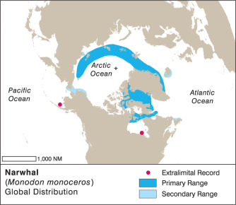Monodontidae - an overview | ScienceDirect Topics