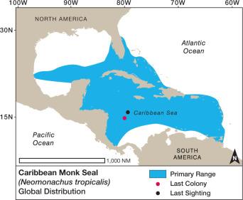 Hawaiian Monk Seal - an overview | ScienceDirect Topics