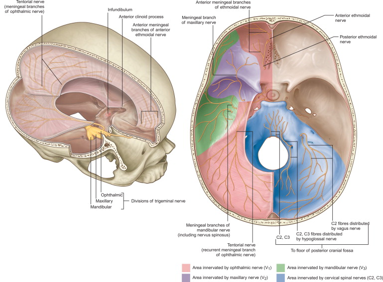 Anatomy Of The Trigeminal Nerve Nerves And Nerve Injuries Chapter 22