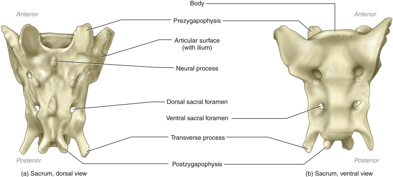Diferent condition and ages of animals Proceed from the South of Spain Set of 10 cow mandibles