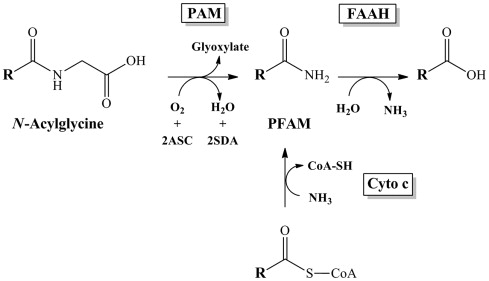 Oleamide - an overview   ScienceDirect Topics