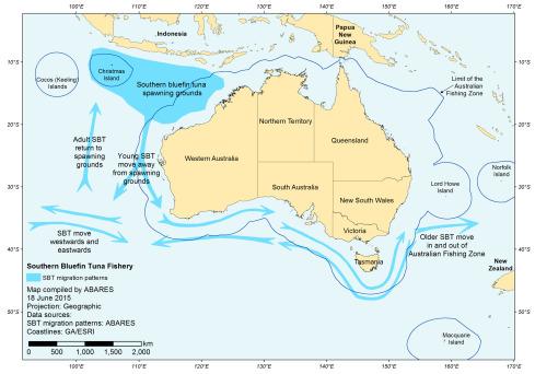 Ranching of Southern Bluefin Tuna in Australia - ScienceDirect